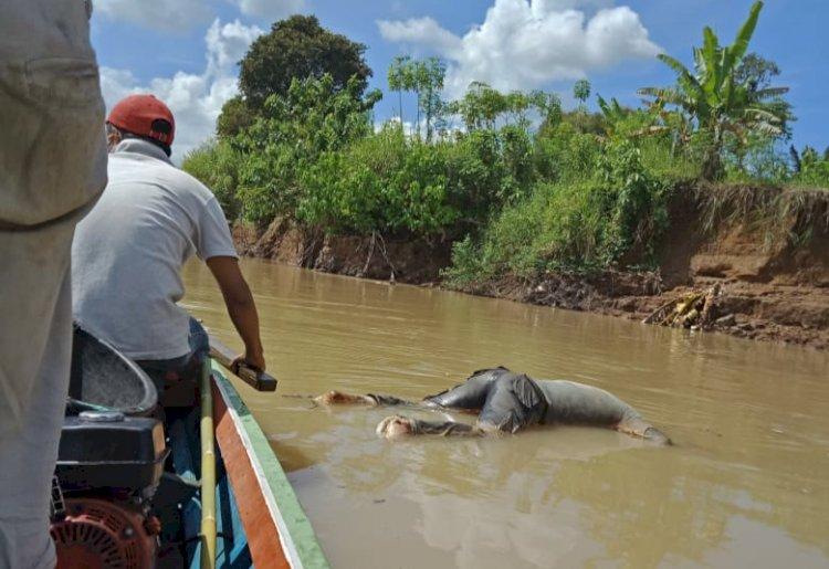 BREAKING NEWS! Warga Tanjung Menanti Bungo Dihebohkan Mayat di Sungai