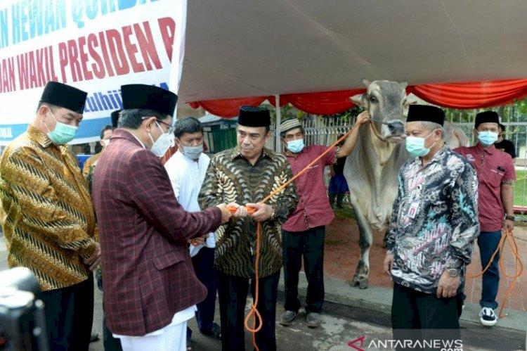Presiden Jokowi Serahkan Sapi Kurban 1 Ton ke Masjid Istiqlal