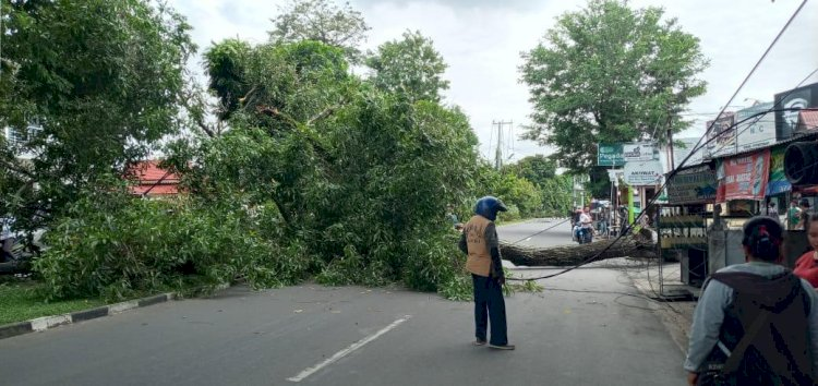 Siang Bolong, Pohon Besar di Kambang Kota Jambi Roboh