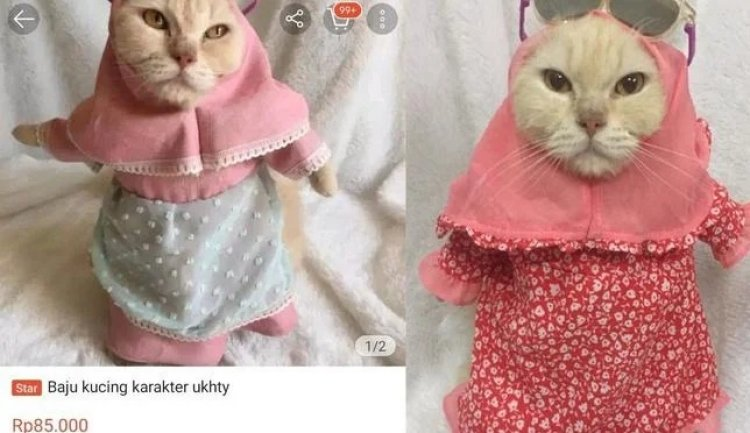 Viral! Online Shop Jual Hijab Syar'i untuk Kucing, Bikin Gagal Faham Netizen