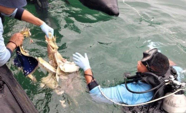 Organ Tubuh Korban Sriwijaya Air Jatuh Ditemukan Penyelam, Begini Kondisinya