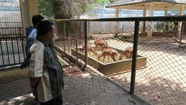Dianggarkan Rp800 Juta Setahun, Taman Rimba Jambi Malah Tidak Punya Freezer Penyimpanan Makan Hewan