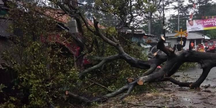 Puting beliung melanda Medan, pohon bertumbangan timpa mobil dan rumah