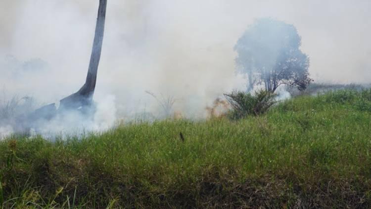 Hari Ini, BPBD Pastikan Jambi Bebas Titik Api
