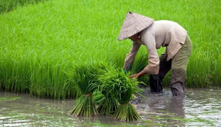 Nilai Tukar Petani Jambi Terjadi di Lima Subsektor