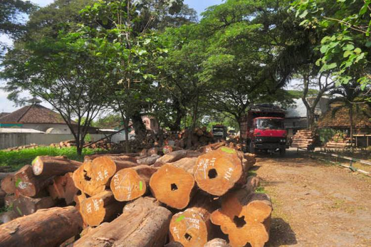 Aktivitas Pembalakan Hutan di Desa Panca Karya Resahkan Warga, Polisi: Jika Tak Hentikan, Kami Tindak!