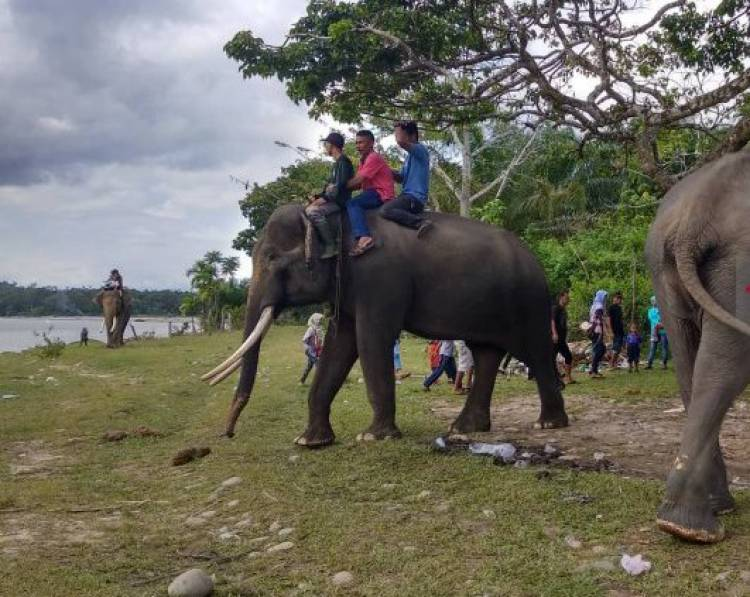 Pengunjung Antusias Berinteraksi dengan Gajah di TWA Seblat