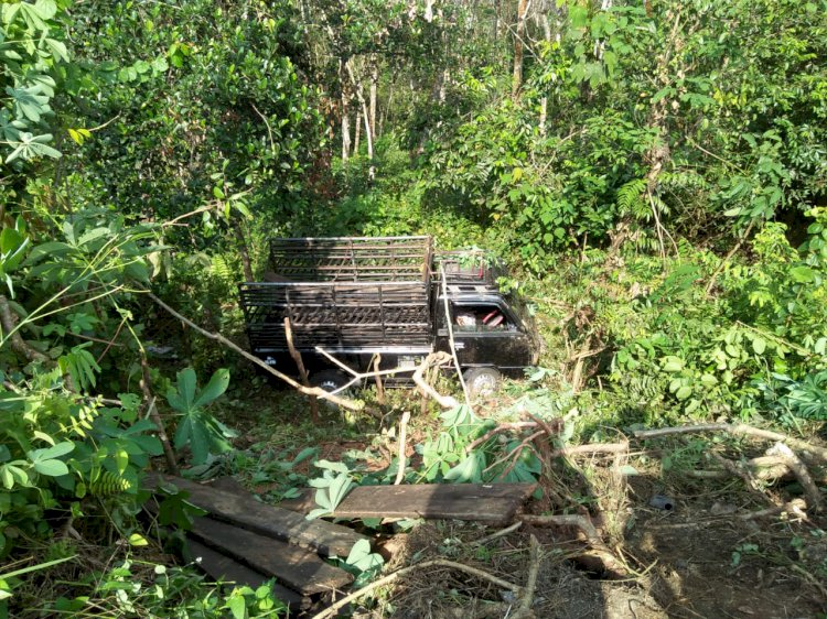 Sopir Mengantuk, Mobil Pickup Bawa Ikan Terjun ke Jurang di KM 42 Bungo