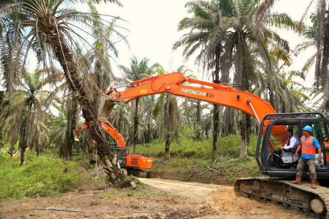 Program Replanting di Muarojambi Belum Sesuai Target, Ini Penyebabnya...