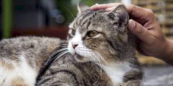 GILA!! Pria Makan Kucing Hidup-Hidup