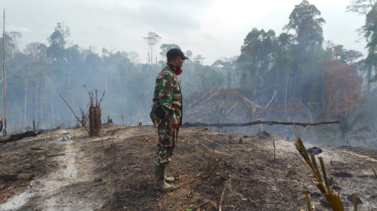 Lahan TNBD Sarolangun Terbakar, Petugas Kesulitan Padamkan Api