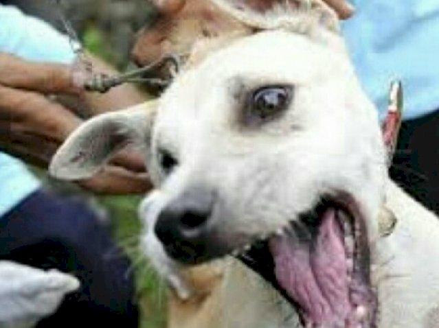 Yogyakarta Buatkan Aturan Larangan Makan Daging Anjing