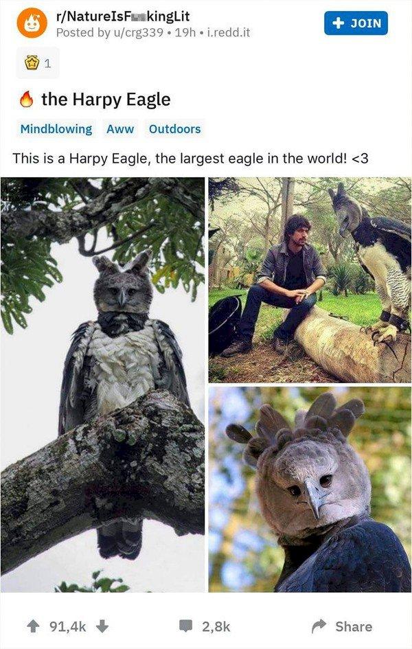 Ngeri Bro! Ini Dia Elang Terbesar di Dunia