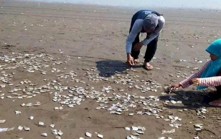 Begini Kata DLH Cilacap Soal Kematian Ribuan Ikan di Pantai Cemoro
